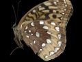 ButterflyScan062912