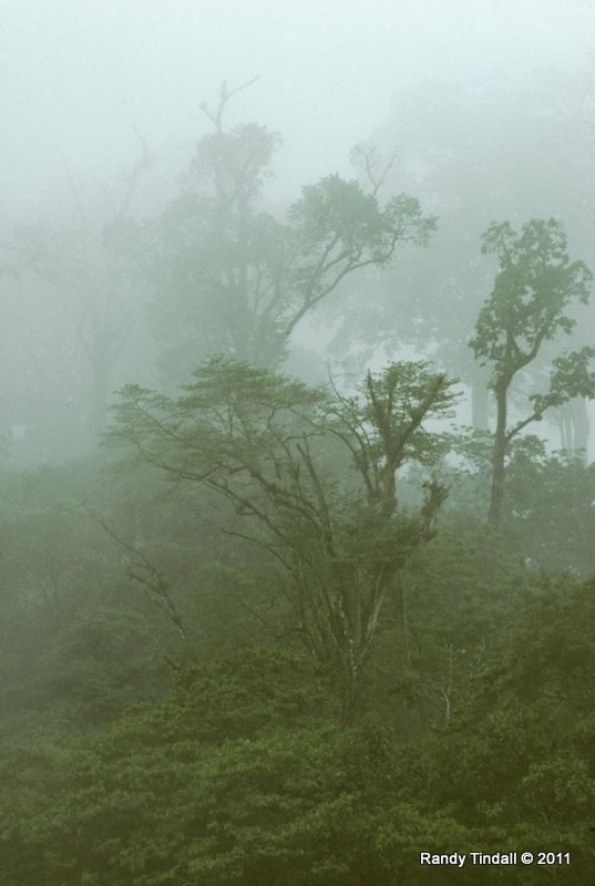 Cloud Forest, Chiapas, Mexico