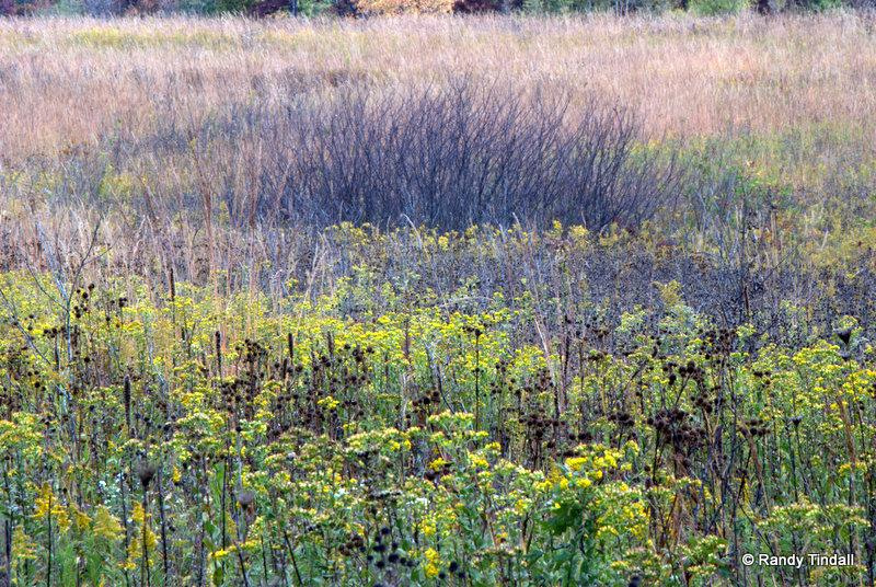 Autumn Prairie Landscape