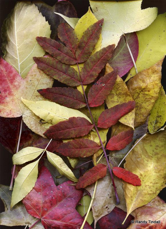 Fall Leaves Medley