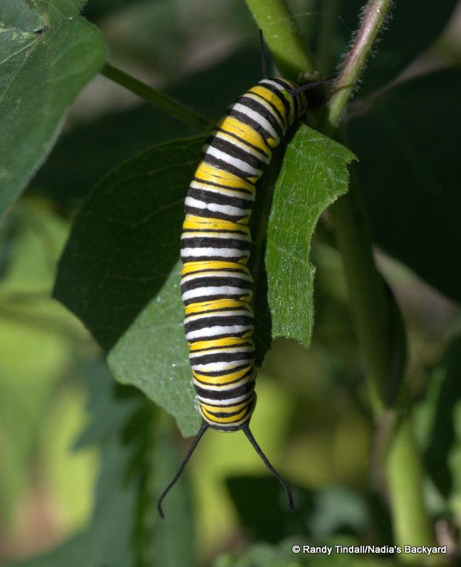 Denver Azur Lane: A Miracle Of Monarchs